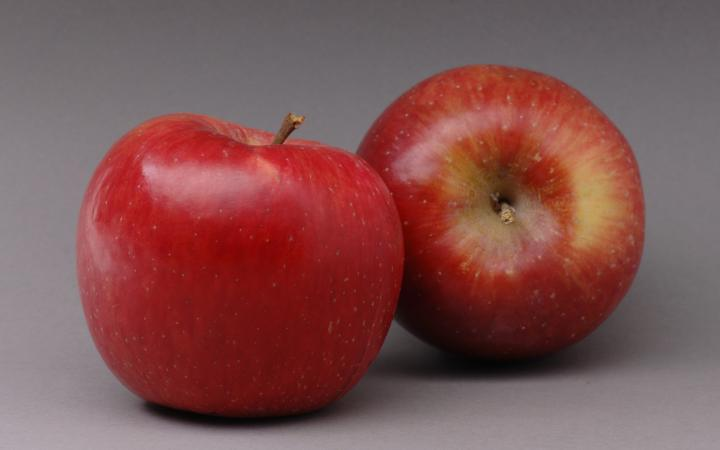 Candy-WN-Apples-02.jpg