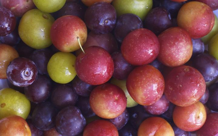 Mixed-plums.jpg